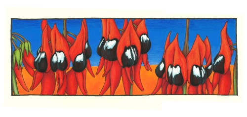 Sturt Desert Pea 2 Coloured Pencil & Acrylic April 2012