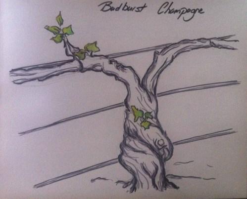 Budburst Champagne