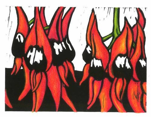 Sturt Desert Pea Hand coloured pencil