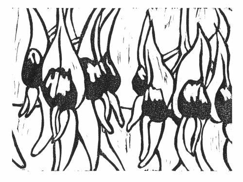 Sturt Desert Pea Hand Printed