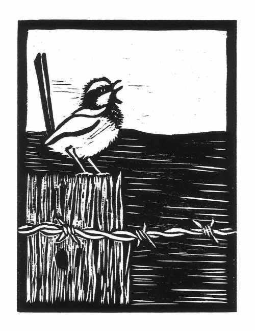 Blue Wren Woodcut