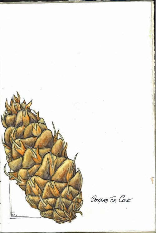 Douglas Fir Cone Journal Page Jul 14