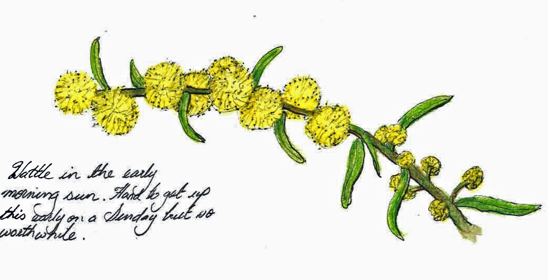how to draw wild australian flowers