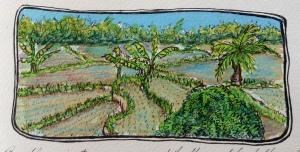 9b Rice paddies Ubud