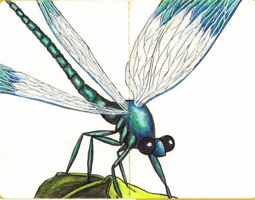 No Fear of Flying Dragonfly Water colour and ink