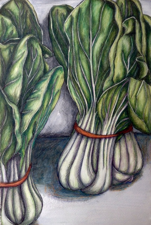 Bok Choy Farmers Market ink and watercolour pencils