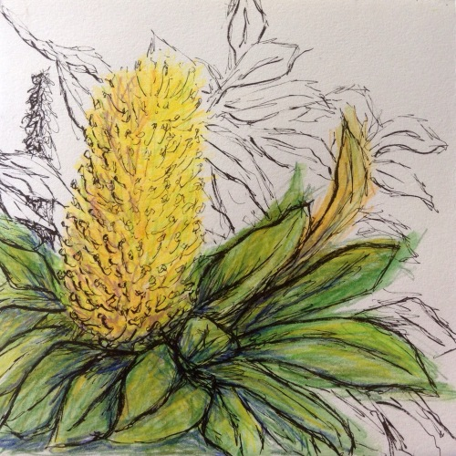 Banksia Flower Journal Page Water colour pencil and ink