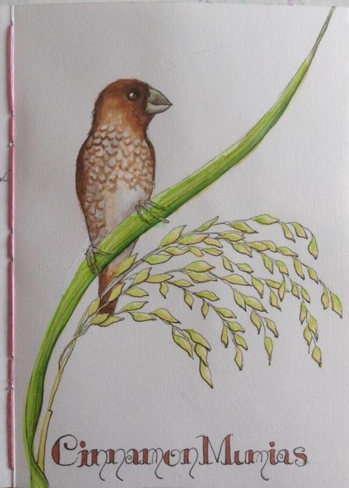 Cinnamon Munias  Water colour and ink  Bali 2015 journal