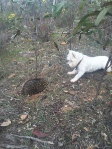Hannah and the Echidna