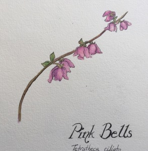 Pink Bells watercolour and ink