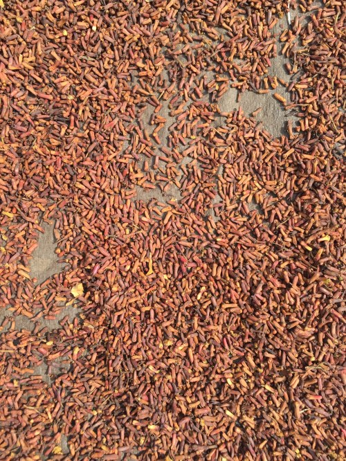 Cloves drying by the side of the road