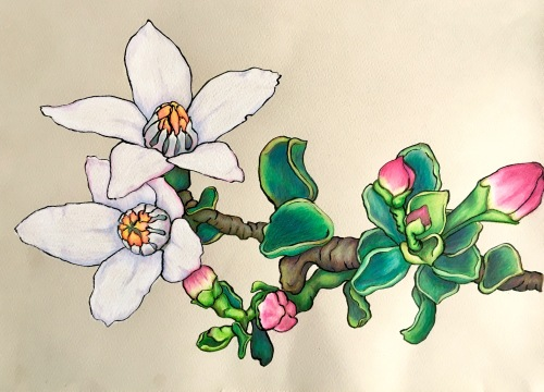 Fairy Wax Flower Coloured Pencil and Ink
