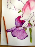 Starting the coloured pencil