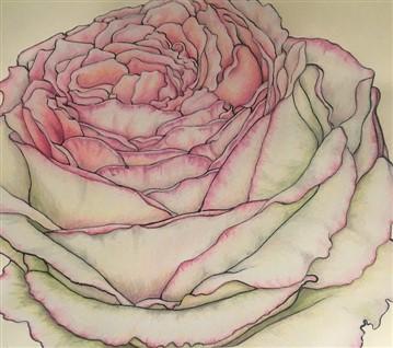 Pierre de Ronsard Rose (359 x 318)